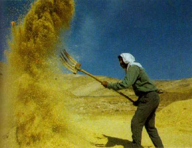 Winnowing Barley On The Threshing Floor Meaning
